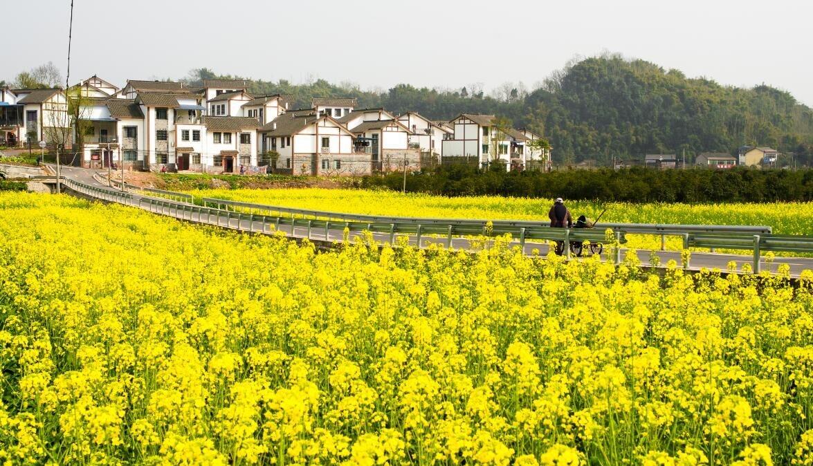 走进邛崃幸福家园 评选灾后重建示范新村